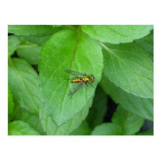 Orange long legged fly sitting on mint leaf postcard