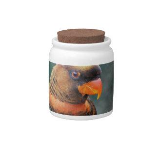 Orange Lorikeet Candy Jar