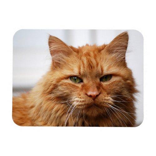 Orange Maine Coon Cat Flexible Photo Magnet