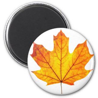 Orange maple leaf magnet