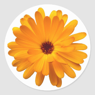 Orange Marigold Classic Round Sticker