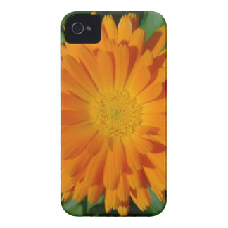 Orange Marigold Close Up With Garden Background iPhone 4 Covers