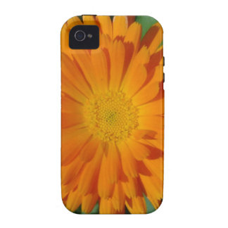 Orange Marigold Close Up With Garden Background iPhone 4/4S Covers