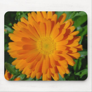 Orange Marigold Close Up With Garden Background Mouse Pad