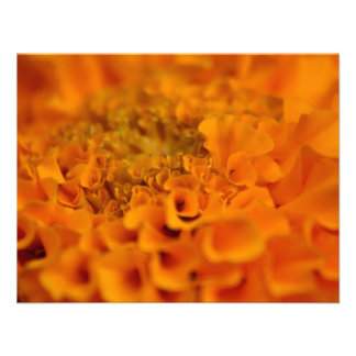 Orange Marigold Flower Custom Invitations