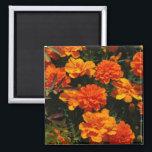 "Orange Marigold Flowers  Magnet<br><div class=""desc"">Orange marigold flower blossoms in bloom.</div>"
