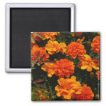 Orange Marigold Flowers  Magnet