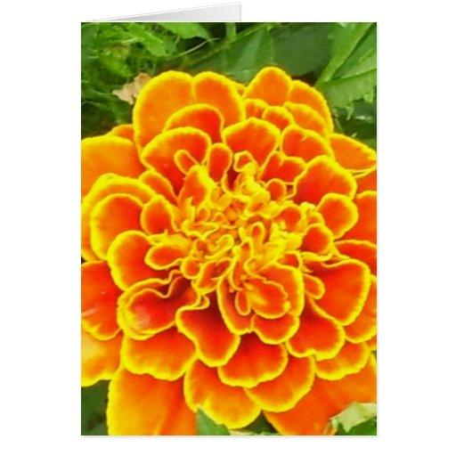Orange Marigold Greeting Card