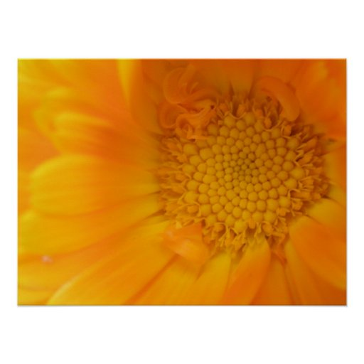 Orange Marigold Macro Print