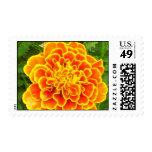 Orange Marigold Postage Stamp