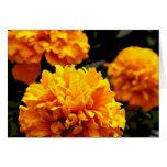 """Orange Marigolds"" Card"