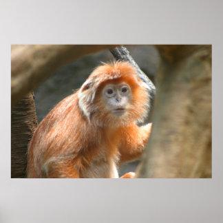 orange monkey large poster