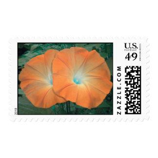 Orange Morning Glory Duo postage