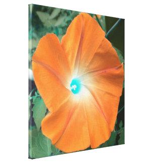 Orange Morning Glory wrapped canvas Canvas Print