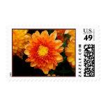 Orange Mum Stamp