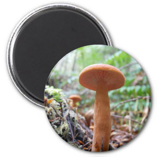 Orange Mushroom 2 Inch Round Magnet