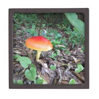 Orange Mushroom in Forest Gift Box