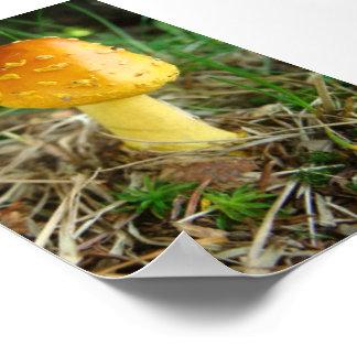 Orange Mushroom Poster Print