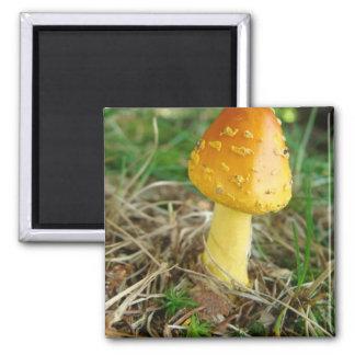 Orange Mushroon Photo Refrigerator Magnet