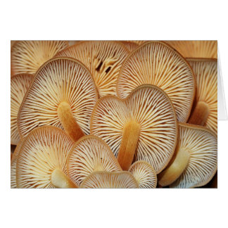 Orange Mycena Mushrooms Stationery Note Card