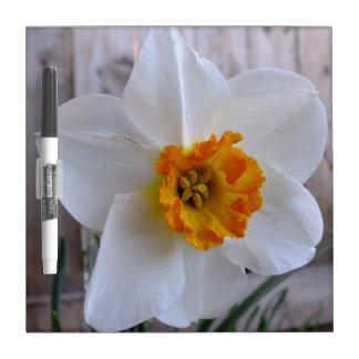 Orange N White Daffodil Dry Erase Board