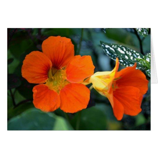 Orange Nasturium Flowers Card