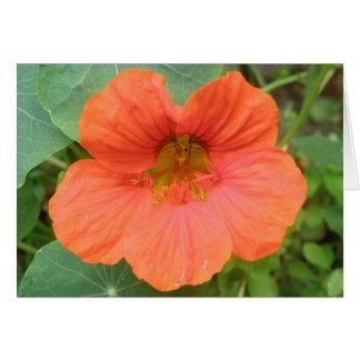 Orange Nasturtium Flower Greeting Card