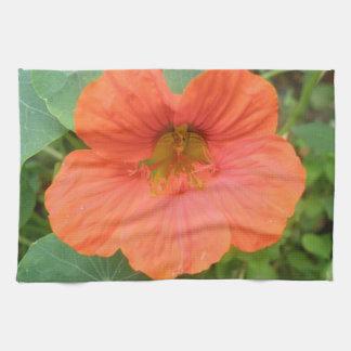 Orange Nasturtium Flower Kitchen Towel