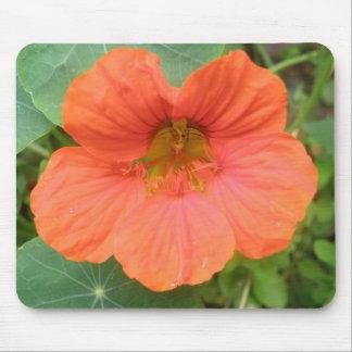 Orange Nasturtium Flower Mousepad