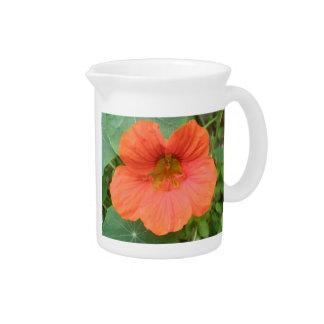 Orange Nasturtium Flower Pitcher