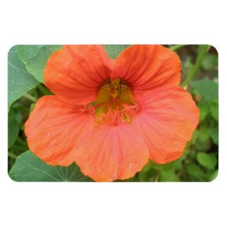 Orange Nasturtium Flower Premium Magnet