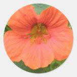 Orange Nasturtium Flower Stickers