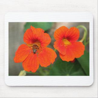 Orange Nasturtium flowers in bloom Mouse Pad