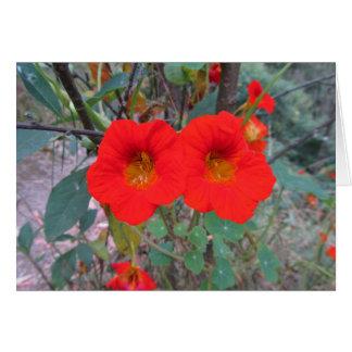 Orange Nasturtiums Flower Card