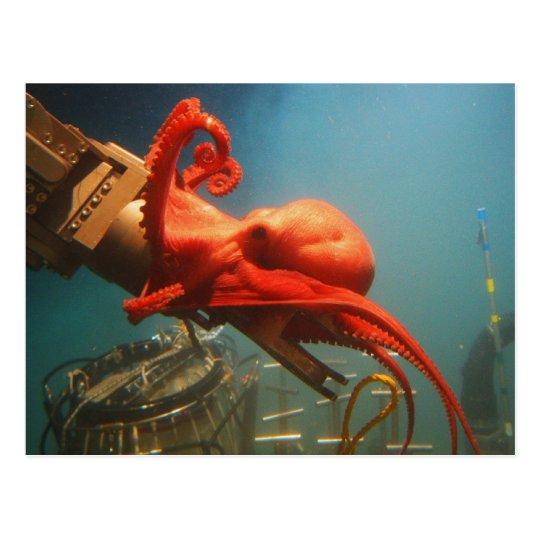 Orange Octopus Postcard