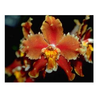 Orange Oncidium flowers Postcard