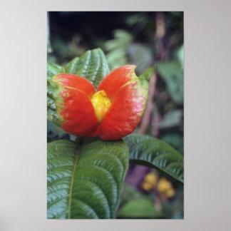 Orange Orange and green plant, Peruvian jungle flo Print
