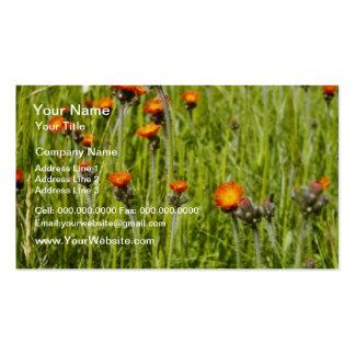 Orange Orange Hawkweed (Hieracium Aurantiacum) flo Double-Sided Standard Business Cards (Pack Of 100)