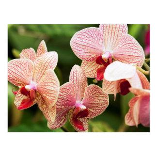 Orange Orchid Hybrid, South Africa Postcard