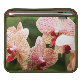 Orange Orchid Hybrid, South Africa Sleeve For iPads