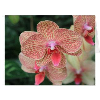 Orange Orchids Card