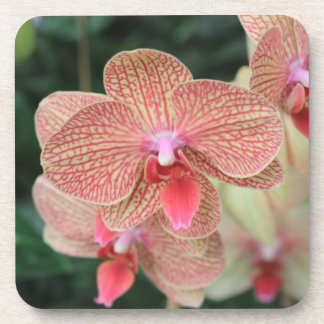 Orange Orchids Drink Coasters