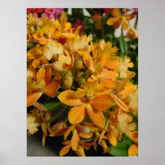 Orange Orchids Poster