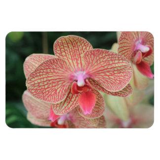 Orange Orchids Rectangular Magnet