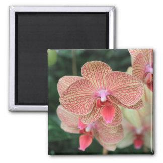 Orange Orchids Refrigerator Magnets