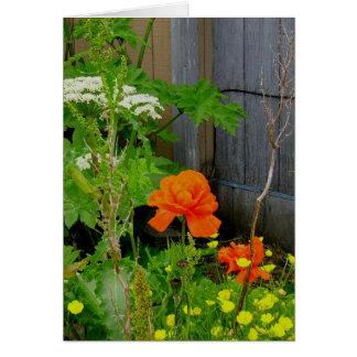 Orange Oriental Poppy Among Weeds Card