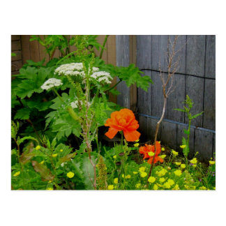Orange Oriental Poppy Among Weeds Postcard