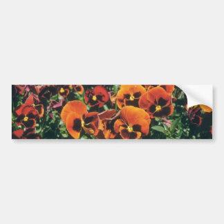 Orange Pansy (Viola) flowers Bumper Sticker