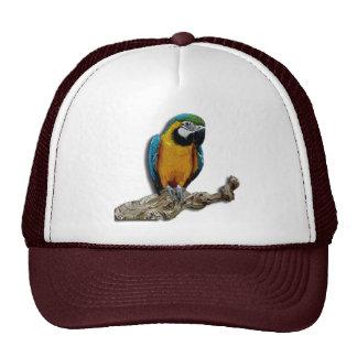 Orange Parrot alone hat