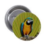 Orange Parrot & Palms button